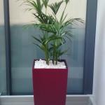 Cubico wth Kentia Palm