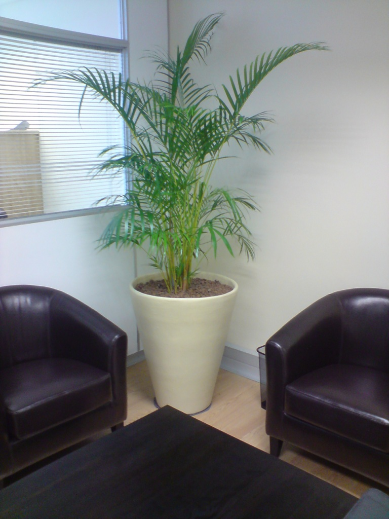 Namib with Bamboo Palm