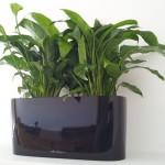 Delta deskbowl with spathiphyllum