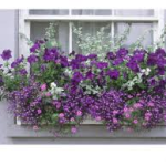 window box garden 2