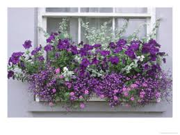 window box garden 2