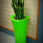 Ashley Container with Sanseveria