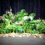 Jungle theme - CTICC