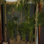 Rainforest Theme - Barnyard Theatre Willowbridge